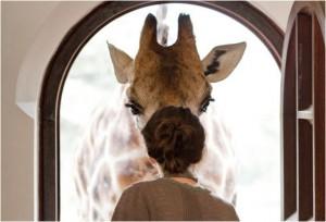 Contornos (066) Giraffe Manor door