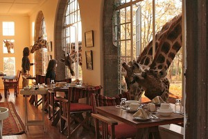 Contornos (066) Giraffe Manor family