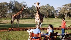 Contornos (066) Giraffe Manor garden