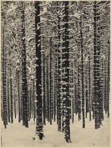Contornos (143) Renger-Patzsch. Bosque nevado, 1951